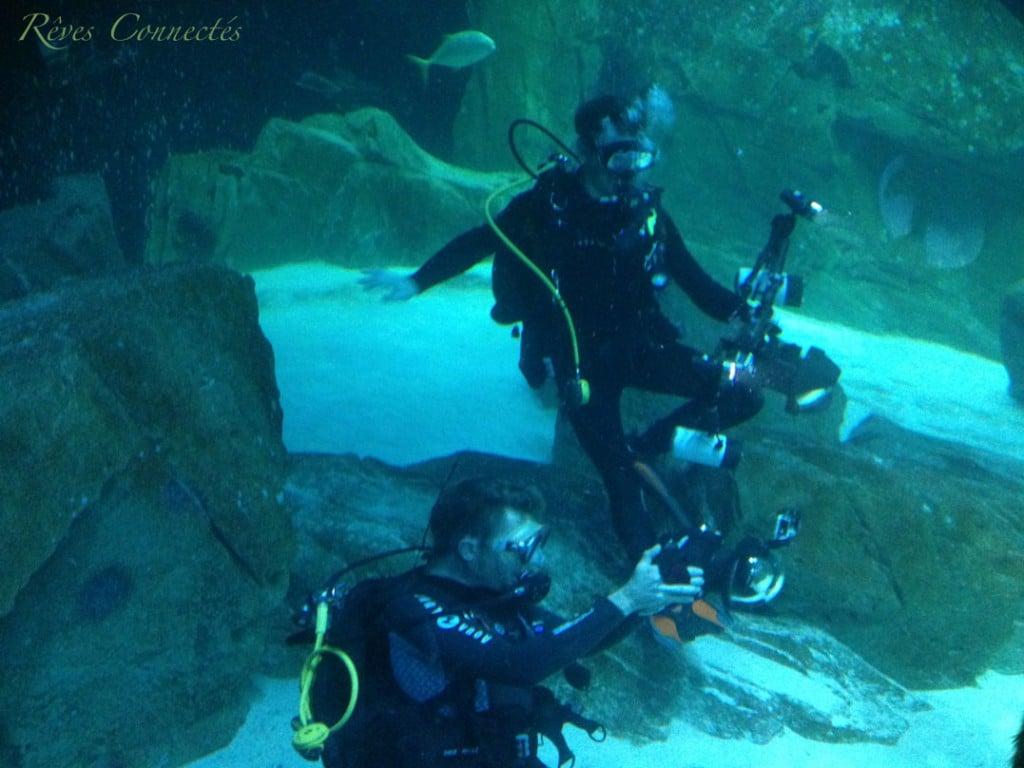 Aquarium-de-Paris-Maud-Fontenoy-Requins-0256