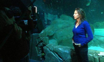 """Maud Fontenoy plonge avec les requins de l'Aquarium de Paris à l'occasion du lancement de l'exposition """"À la rencontre des requins !""""."""