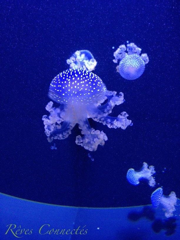Aquarium-de-Paris-Playmobil-7796