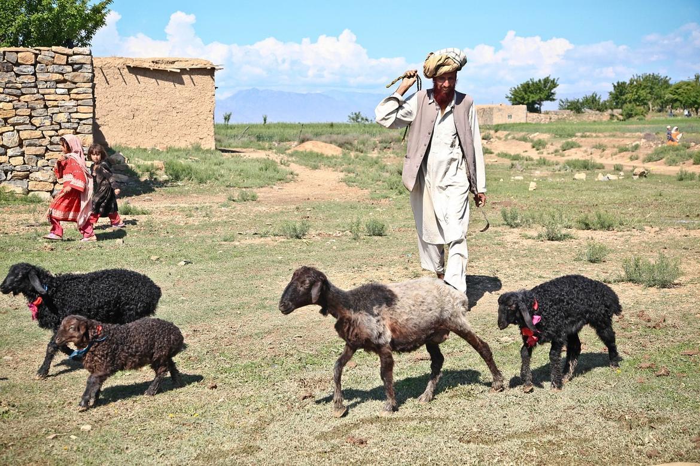 shepherd-60810_1280