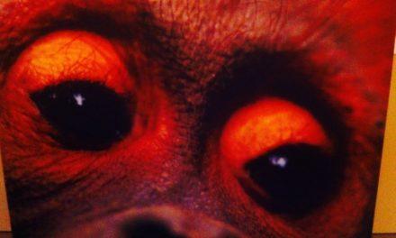 Du documentaire sur M6 ENQUÊTE EXCLUSIVE «À la découverte des grands singes» à l'exposition au Muséum National d'Histoire Naturelle «SUR LA PISTE DES GRANDS SINGES».