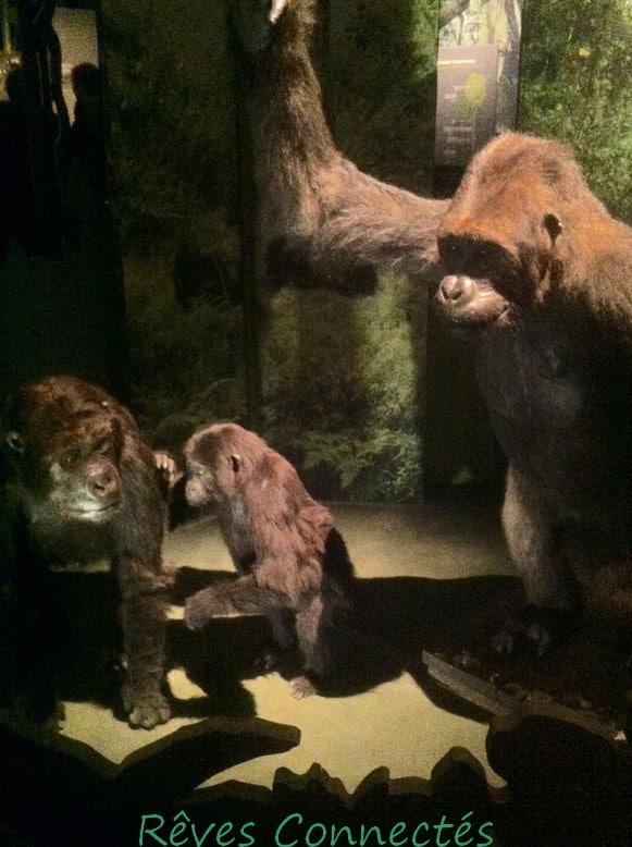 Photo de lexposition a la piste des grands singes