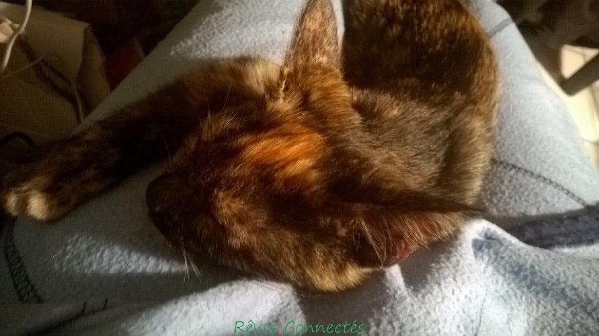 Kaya dort sur le canapé