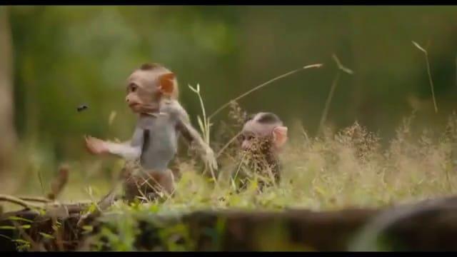 Au royaune des singes vlcsnap-2015-11-01-16h36m21s776