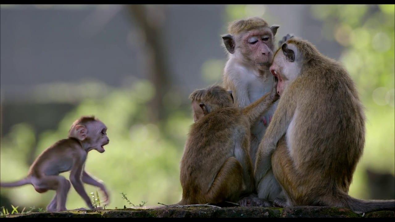 Au royaune des singes vlcsnap-2015-11-01-16h39m55s544
