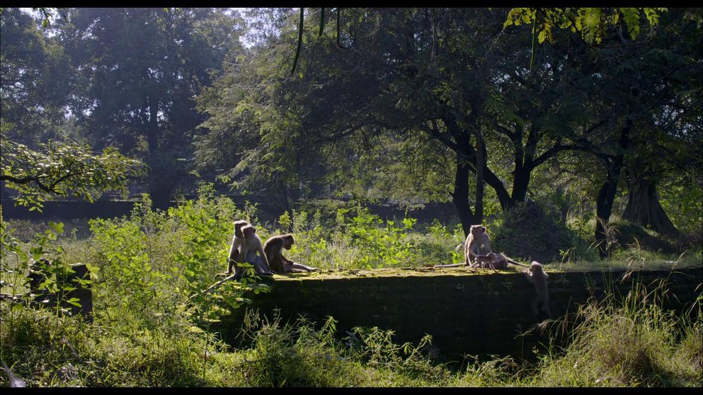 Au royaune des singes vlcsnap-2015-11-01-16h40m15s005