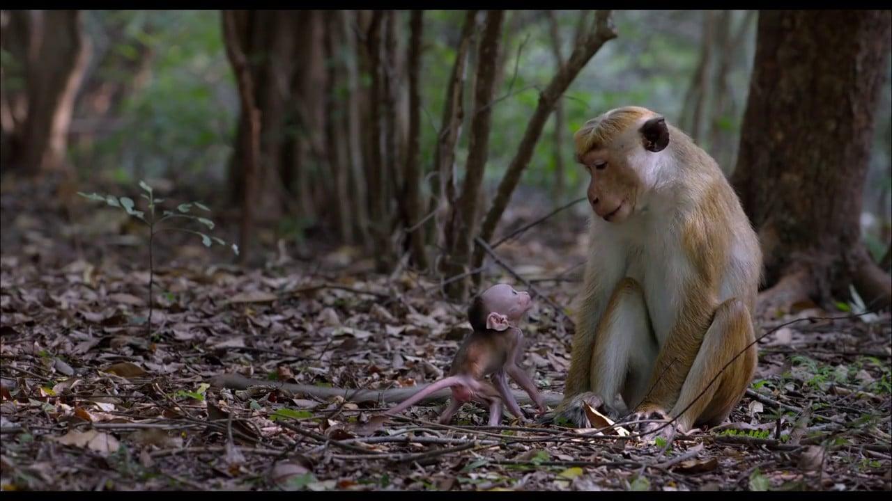 Au royaune des singes vlcsnap-2015-11-01-16h40m32s715