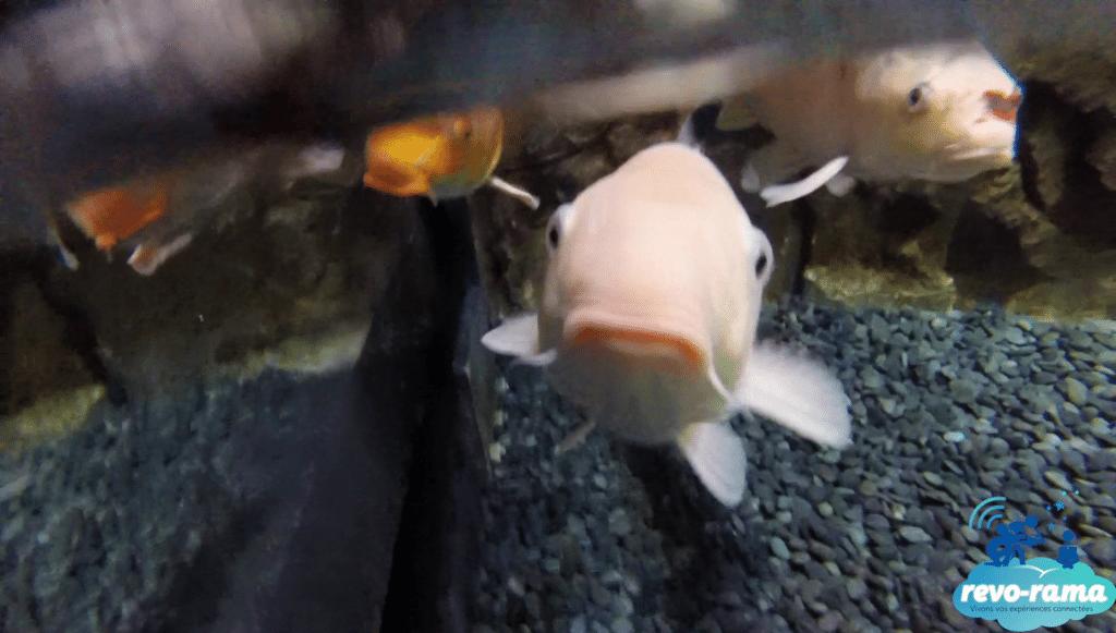 Aquarium de Paris - Le Bassin Caresse