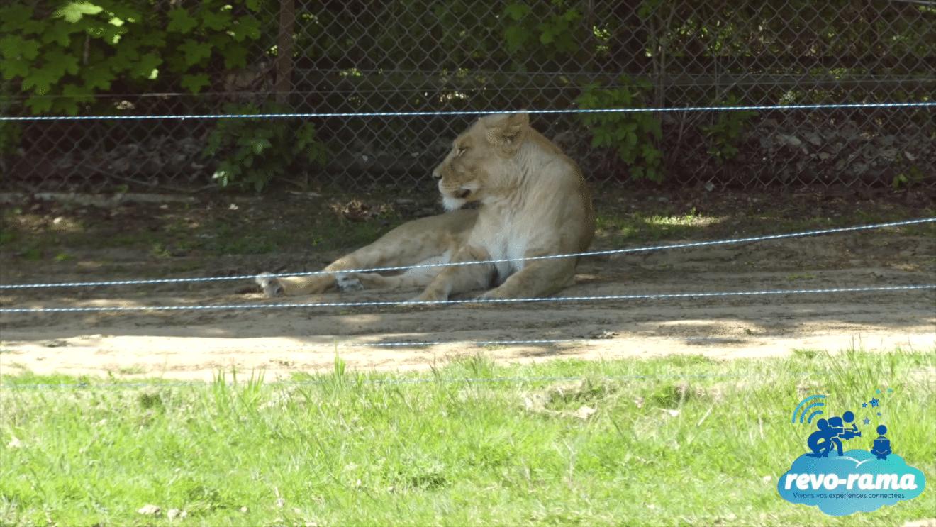 revorama-zoo-safari-parc-animalier-thoiry-2018